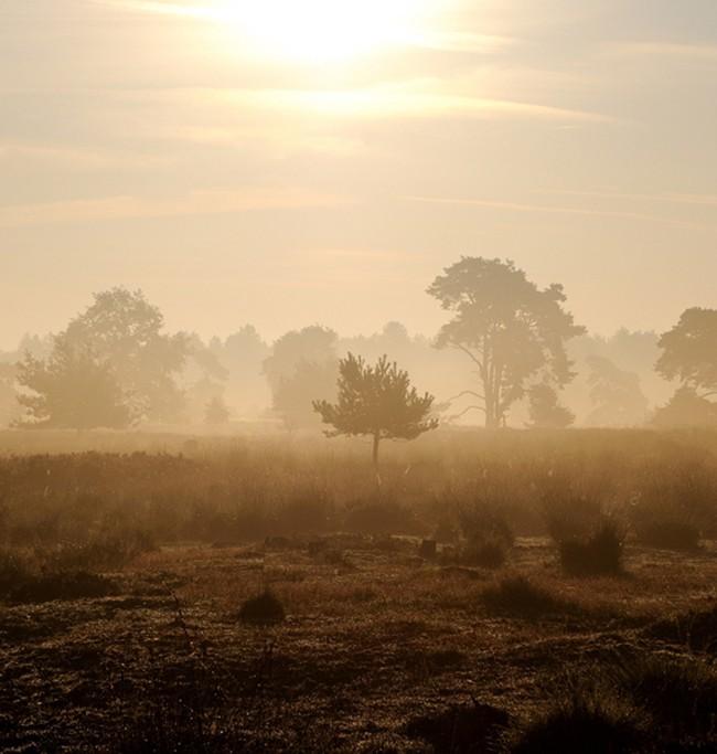 René van Glabbeek – Landschap