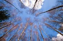 Harald Hagenaars – Bomen