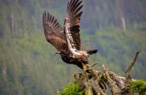 Jurgen Hermse – Roofvogels